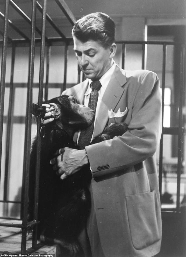 Wyman snapped Ronald Reagan with Bonzo the chimpanzee on set for 'Bedtime for Bonzo' in 1951 for Life Magazine. 'I used to walk around the set with him, holding his hand,' she said to The Journal News of White Plains in 1984. 'You began to think of him as a big kid with hair, except he had a very powerful grip, not like a 5-year-old'.