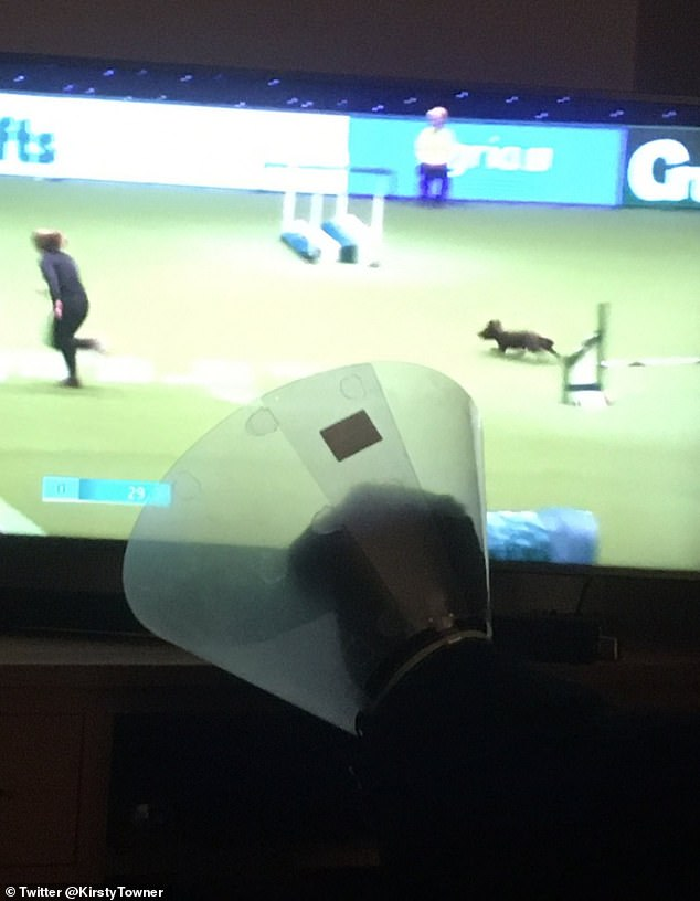 Kirsty Towner, of Dunblane, Scotland, shared this photo of his injured dog Angus, looking enviously at the agility with his cone