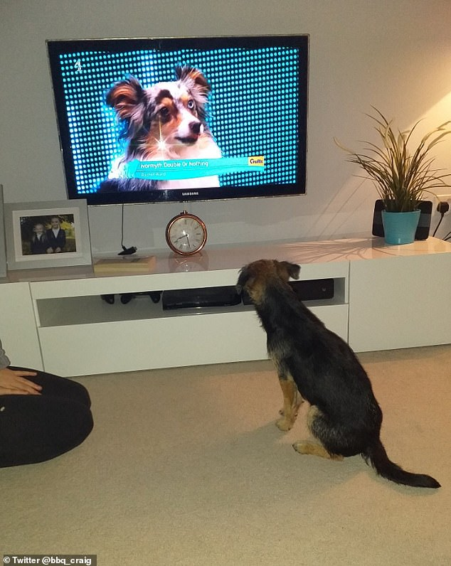 Craig, of Conisbrough, told how Bonnie the Border Terrier loves to watch Crufts, apparently her favorite show