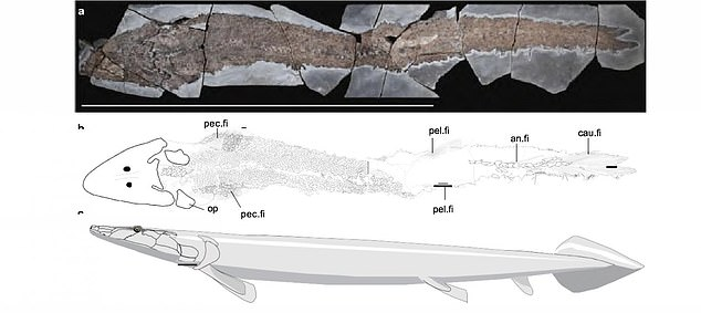 The evolution of fishes into tetrapods - four-legged vertebrates of which humans belong - was one of the most significant events in the history of life.