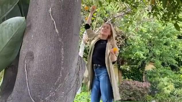 FRUITFUL ACTIVITY: Amber Heard picks oranges in her garden