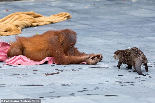 Le zoo prétend permettre à deux espèces animales de vivre ensemble et d'interagir est un «enrichissement» pour les deux parties