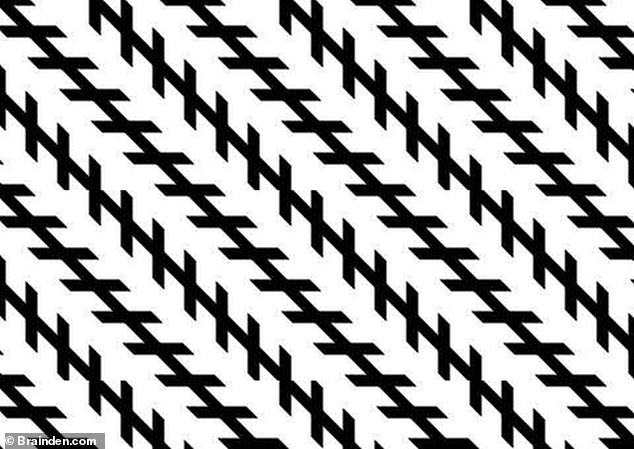 The Zollner illusion (pictured) was invented by Johann Karl Friedrich Zollner, from Germany. The lines are actually parallel but the brainteaser uses the angle of the short lines helps to create the impression that one end of the longer lines is nearer to us than the other end