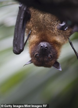 Like many viruses, bats may have been the original carriers of COVID-19