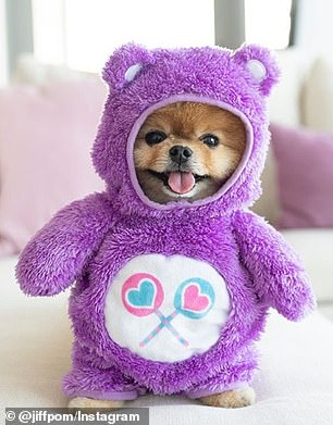 Lap dog: The site estimates that JiffPom can make $45,187 per sponsored post, and in the past he's done partnerships with TikTok, Target, and Banana Republic