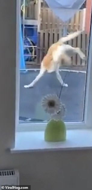 Video of the Day: Hilarious Moment Dog Upstages Little Boy with his Trampolining Skills