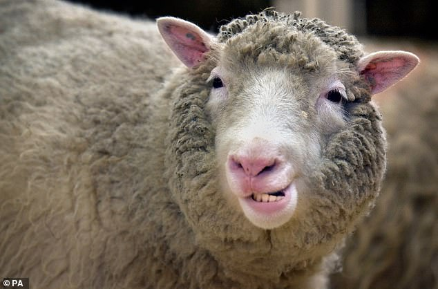 Dolly the Sheep was cloned in 1996 and revealed to the world in 1997. Her case has been studied by scientists for more than 20 years.