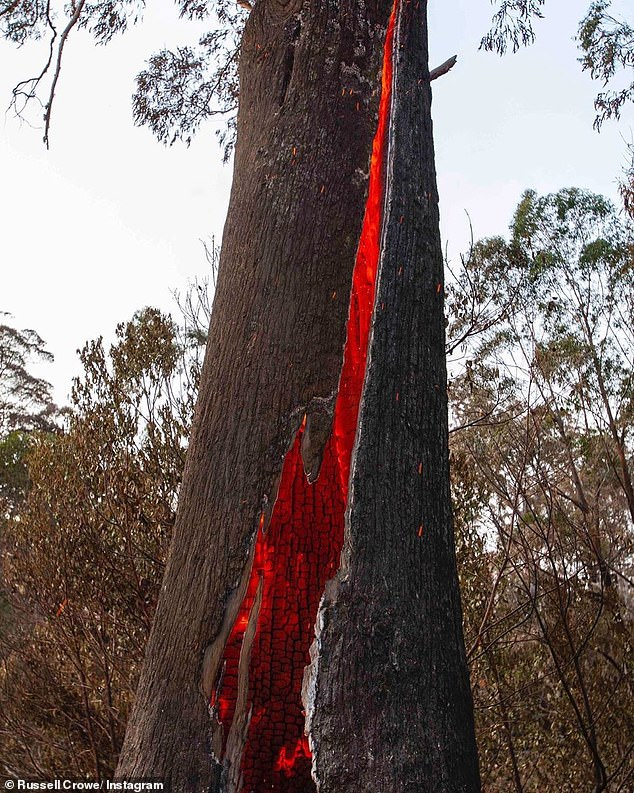 Remember this? The first photo Russell posted showed a eucalyptus tree with fire embers burning the plant from within