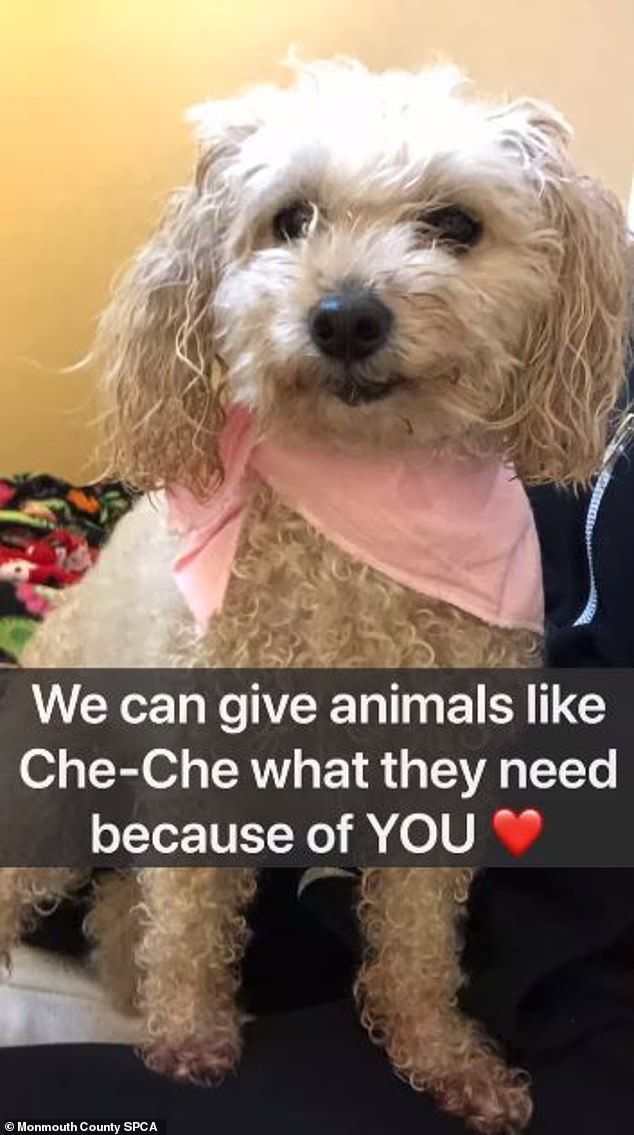 Help out: The SPCA has other animals who also need care and adoption, and they're soliciting donations now