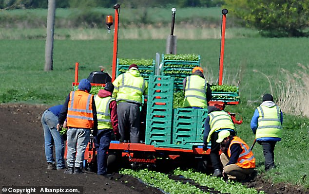 Farmer tells how his company spent £ 40,000 on a charter flight to send Romanian workers to the UK to teach British fruit pickers