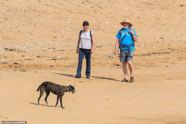 Good day for a walk: Dog owners took their pets for an amble along Dorset's coastline