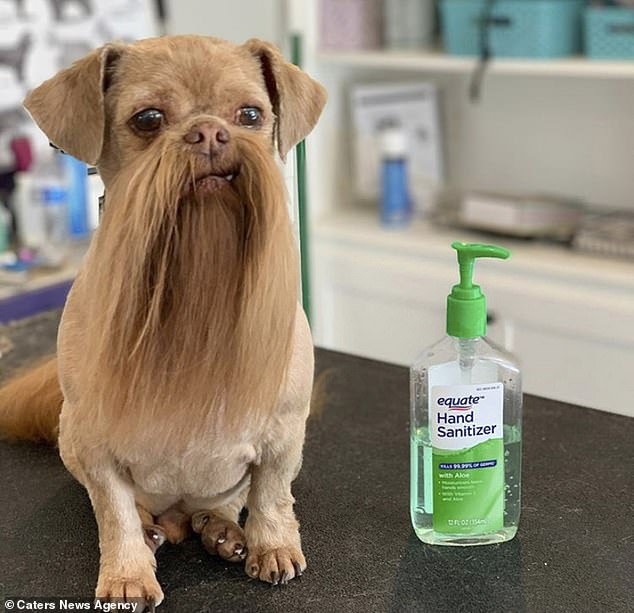 Candice and Cody say their pooch loves the limelight and doesn't seem to mind posing up when strangers ask for snaps of his unique look
