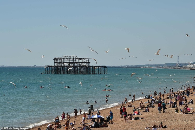 Gulls flock above sunbathers on the beach in Brighton as Britain enjoys roasting 75F (24C) summer heat