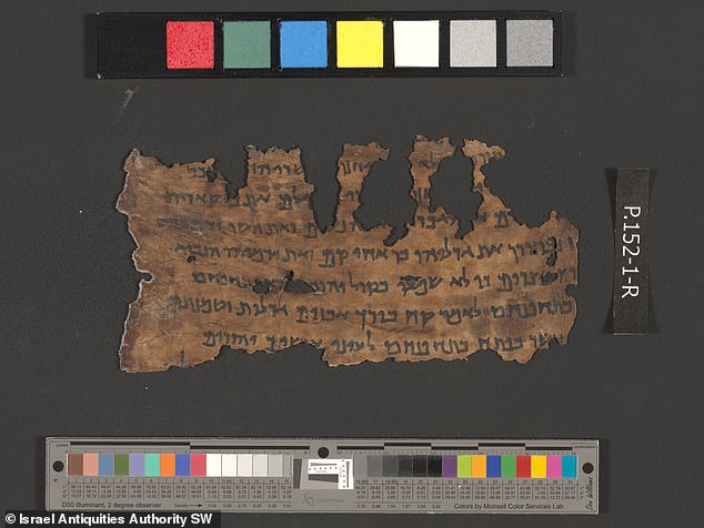 The Dead Sea Scrolls are being pieced back together using DNA 'fingerprints' lifted from the animal skins on which they were written some 2,000 years ago. Pictured: a scroll fragment