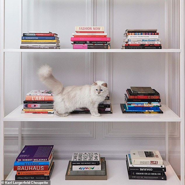 The designer Birman cat Choupette was long believed too be his sole heir after he passed. In fact, the designer's housekeeper is believed to be one of his heirs, on the condition she keeps taking care of the feline