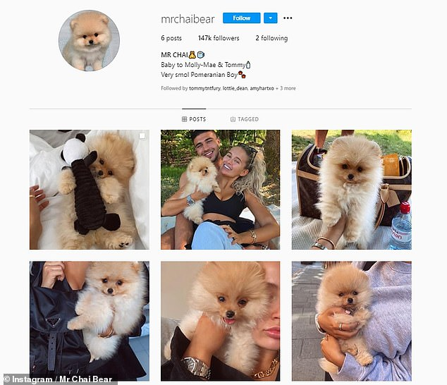 Difficult times: Mr. Chai's death prompted several stars to talk about the importance of researching when buying a dog (they created an Instagram account for him last month)