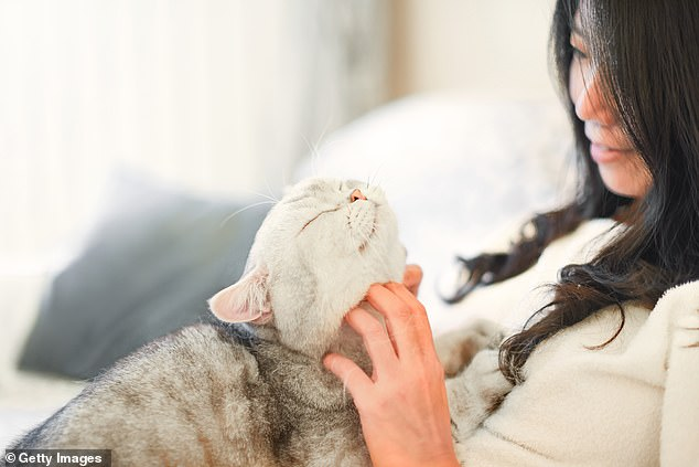 An official report from the British veterinarian said that pets could carry the virus on their fur, which could spread the disease from person to person. In the photo: photo of a woman petting her cat