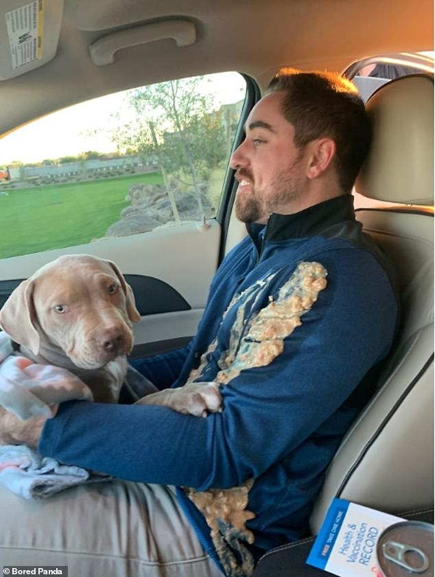 An unknown pet owner, believed to be from the US, is covered in his nervous puppy's sick during the animal's first drive home