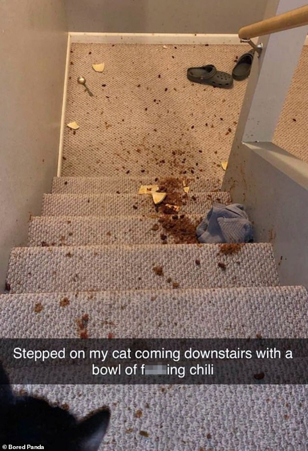An anonymous pet owner was left frustrated after stepping on their cat while walking downstairs - and spilling a bowl full of chilli all over the carpet
