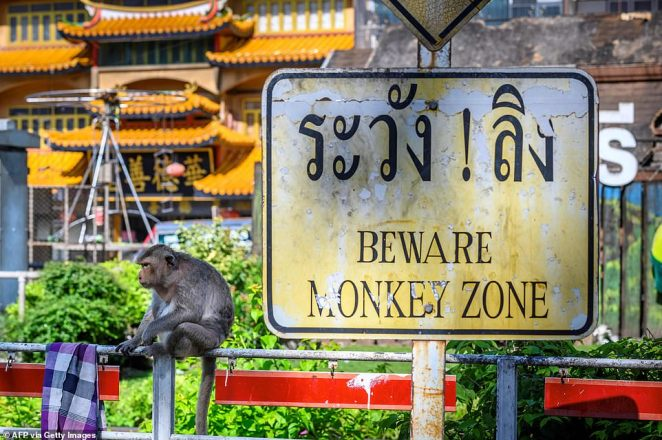 A sign put up to warn tourists about the monkeys now serves as a grim reminder to locals who have been left to deal with the increasingly violent animals after visitors stopped coming