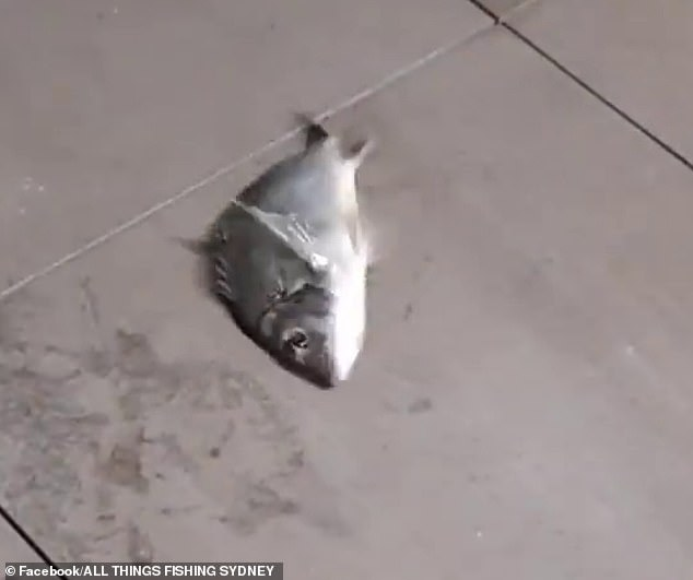 The woman was left surprised after successfully reeling in a fish (pictured) from her balcony