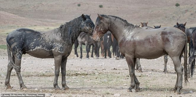 The wait paid off after the pair rolled around on the floor and became entrenched with grey mud, leaving the clashing colts looking like fighting statues
