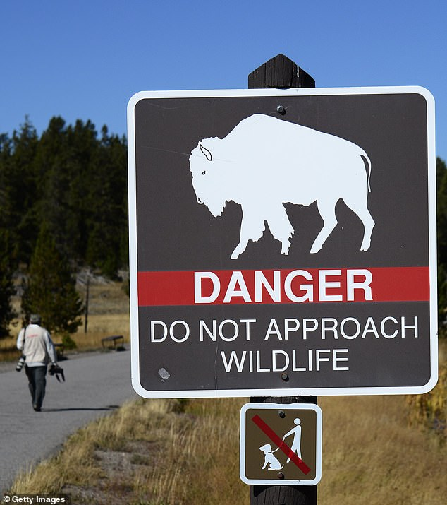 A press release from the National Park Service on Monday stated that the women came within 10 feet of the bison before she was gored. Officials advise keeping at least 25 feet from the animals