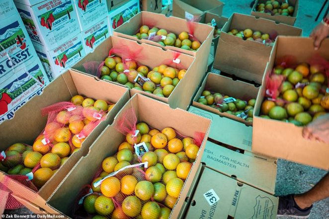 Several pounds of fruit is seen in boxes ahead of the distribution in Miami on Wednesday