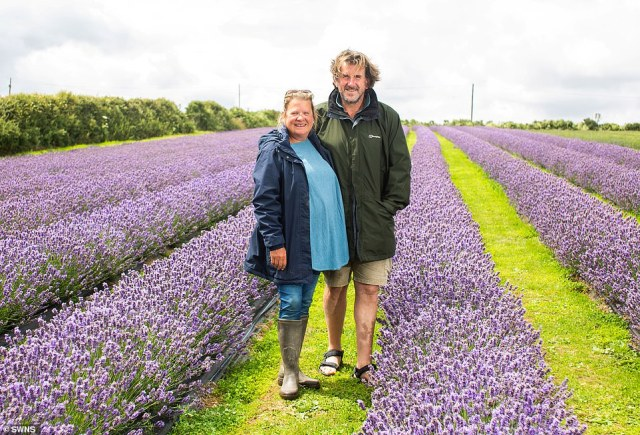 Mark Hall-Digweed, 54, has always worked in agriculture and runs Roskorwell Farm with his wife Sam, 55, (both pictured above)