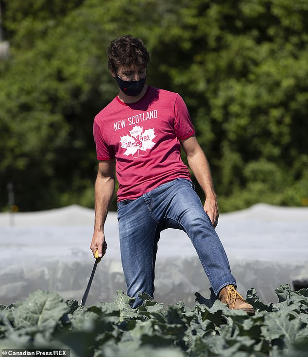 Trudeau was last seen on Wednesday harvesting broccoli at the Ottawa Food Bank Farm in Ottawa to mark Canada Day (pictured)