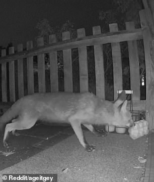 Around 2.10am, it returns for the second carton of eggs