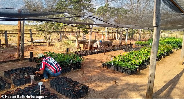 Hector Bellerin has planted his first trees after pledging to grow 3,000 for every Arsenal win