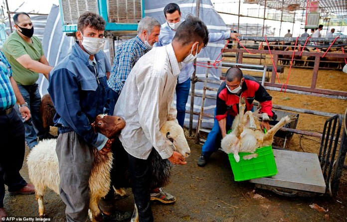 Iranians now buy sheep from cattle market in Tehran to slaughter for Eid al-Adha
