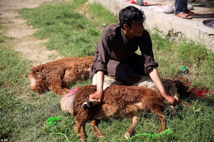Man helps slaughter sheep for Eid al-Adha, which typically sees meat distributed to poor people, in Kabul, Afghanistan