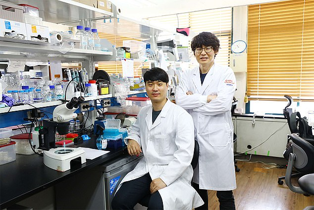Sangsoon Park (left) and Professor Seung-Jae V. Lee (right). They found that the activity of the VRK-1-to-AMPK monitoring process is increased when a creature is in low cellular energy status