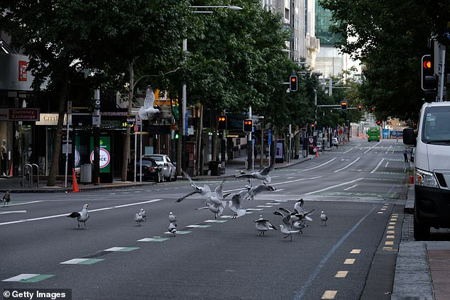 Pictured: Seagulls take over Queen Street in Auckland's CBD on March 26 during lockdown