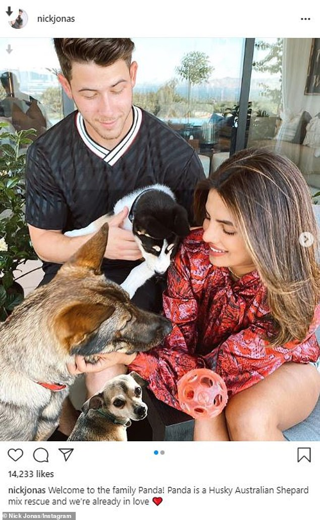 What Nick Star Has A Dog Named Henry : named, henry, Jonas, Priyanka, Chopra, Their, Adorable, Rescue, Puppy, Panda, Daily, Online