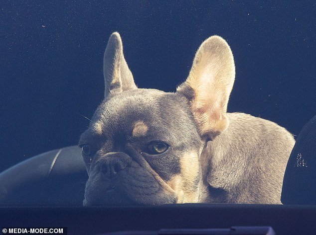 Too cute: Liam sat in the car with the puppy on his lap, sweetly peering out the window as they waited for her to return