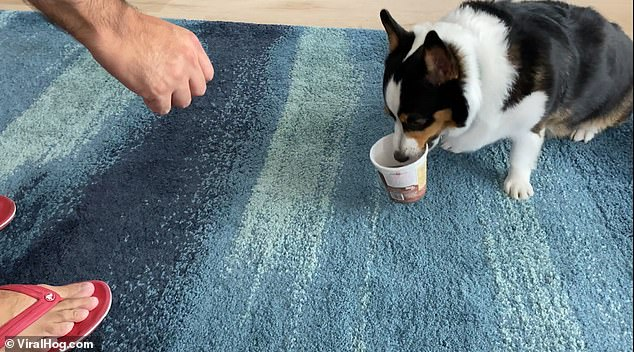 When someone reaches out their hand, Zelda picks up the tub of ice cream and moves it away