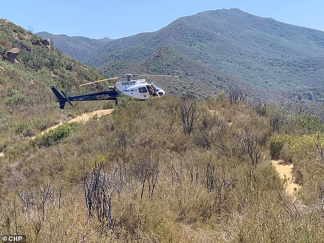 The CHP Golden Gate Division sent a helicopter, pictured, and found the man and woman on a trail with the cow and calf standing just feet away
