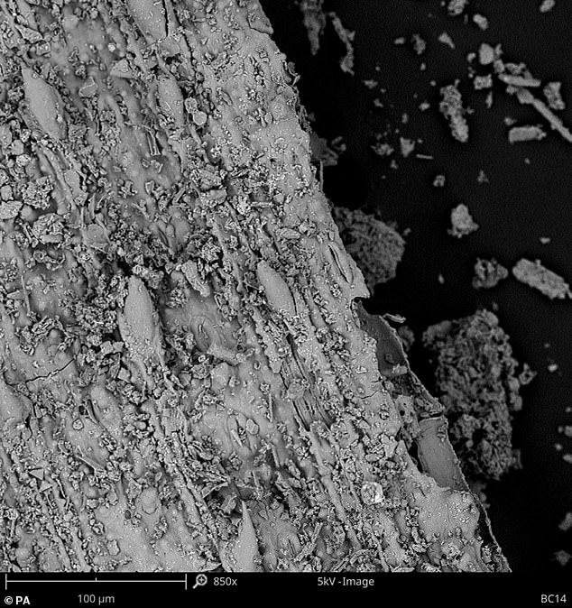 Microscopia dos materiais encontrados e que eram usados como cama por humanos há 200.000 anos
