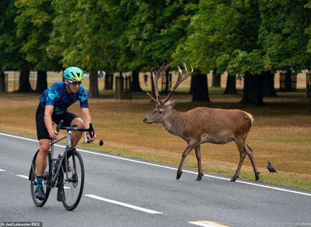 A cycling passes a stag in Bushy Park, South West London, as people are allowed back into enjoy the park before the bad weather moves in