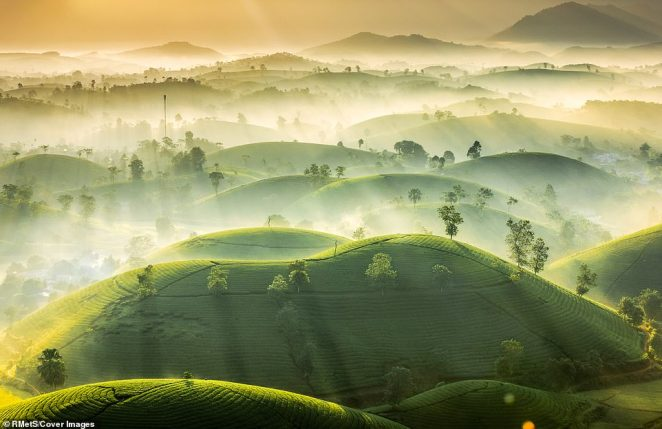 LongCoc Tea Hill, in the Tan Son District of the Phu Tho Province in Vietnam, was photographed by Vu Trung Huan. The area is filled with a number of small hills covered in tea farms. The image shows a mist settling between the hills, the reason tourists to flood to the area every winter. The sun's rays are broken up by the fog, creating a striped effect