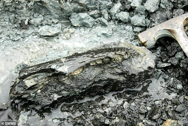 Pictured, the shin bone of the giant sloth as it was seen in 2004 when first spotted by archaeologists in Peru