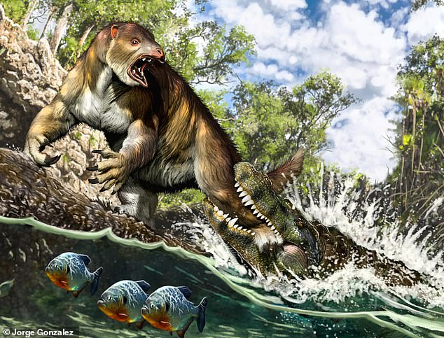 Pictured, an artist's impression of a Purussaurus attacking a sloth. A prehistoric sloth unearthed in the Amazonian rainforest was killed by the biggest known species of crocodilian to ever lived, reveals new research