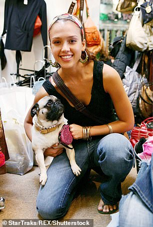 The number of brachycephalic dogs has boomed dramatically across the world in the last decade, due in part to their popularity with celebrities including Jessica Alba