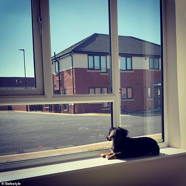 This adorable miniature dachshund, from an unknown UK location, sits and looks out at the empty road excited for some playtime