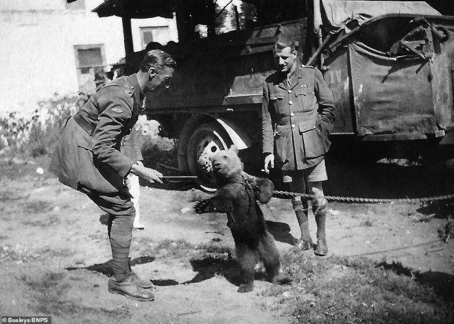 In this black and white photograph a bear with a chain tied around its neck dances for the amusement of two officers stood next to a transport vehicle. The photo was taken during the Russian Revolution when British forces were sent to support the White Russian soldiers