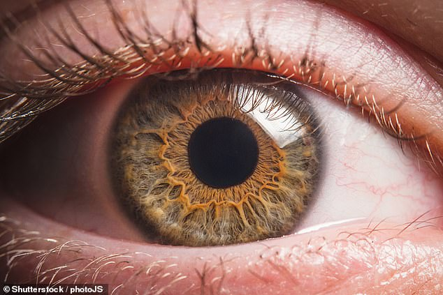 Glaucoma is a group of eye disorders which, until some years ago, were thought to be due to increased pressure within the eye putting pressure on the optic nerve [File photo]
