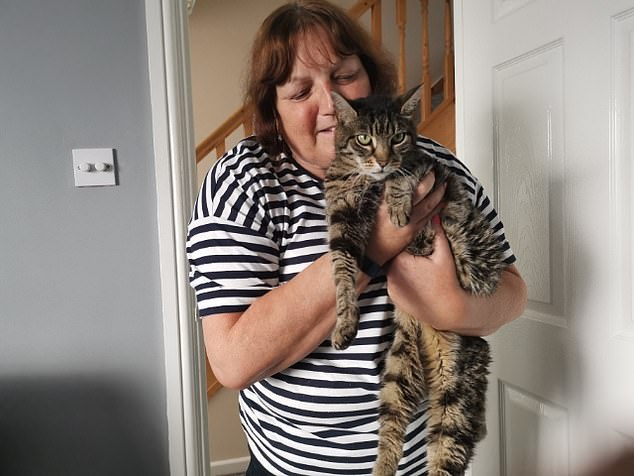 Mrs Chapman, an English teacher who lives in Helston, Cornwall, with her husband, Paul, added: 'He's always been mischievous. If anyone's going to get into trouble, it's Monty.' She had launched several Facebook appeals to try and find him